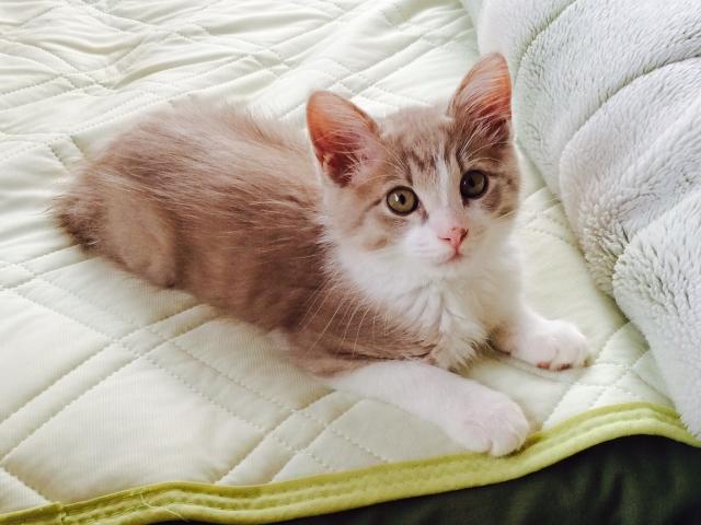 眼睛瞳孔閃爍異常光芒,俗稱「貓眼」,醫學上叫做「白瞳孔」。