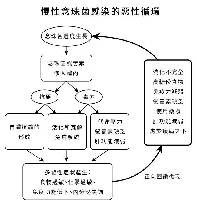 慢性念珠菌感染的惡性循環