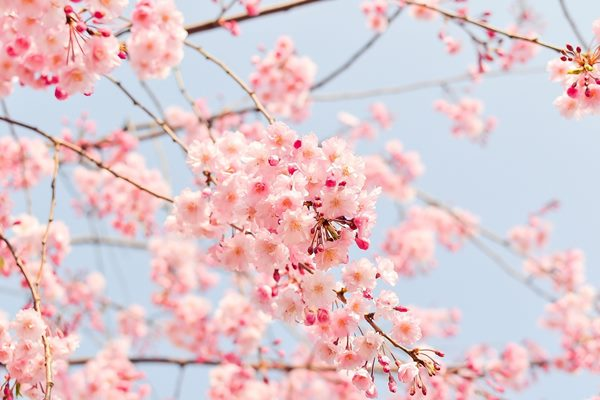 迎接一年當中第一個節氣「立春」的到來,我們應當慎始迎吉祥。