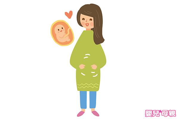 肚子裡的胎兒成長過程