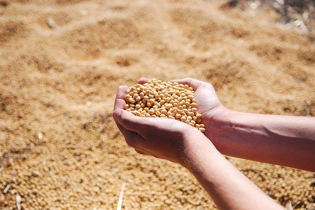 食用大豆會導致男性體內的雌激素和睪固酮失調,進而影響男性性方面的健康。