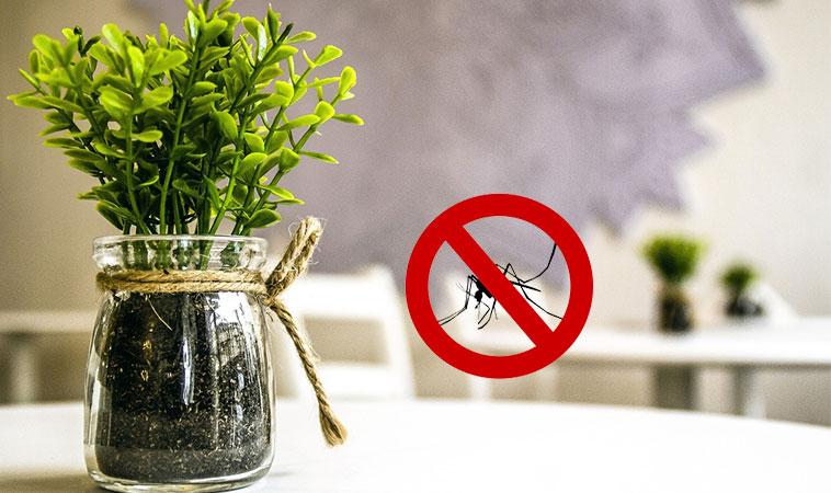 拒絕蚊子打擾!這6種驅蚊植物不只好聞還可食用