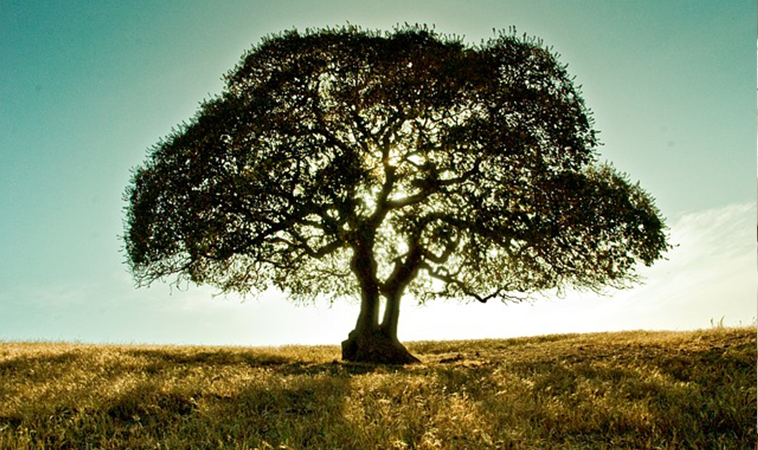 樹的豐盛與可貴 伴我成長