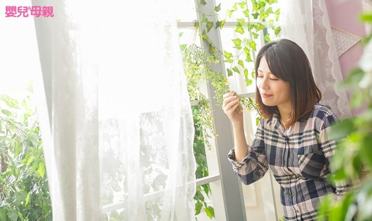 室內髒空氣比戶外多!3種淨化空氣、吸收毒物的盆栽擺起來