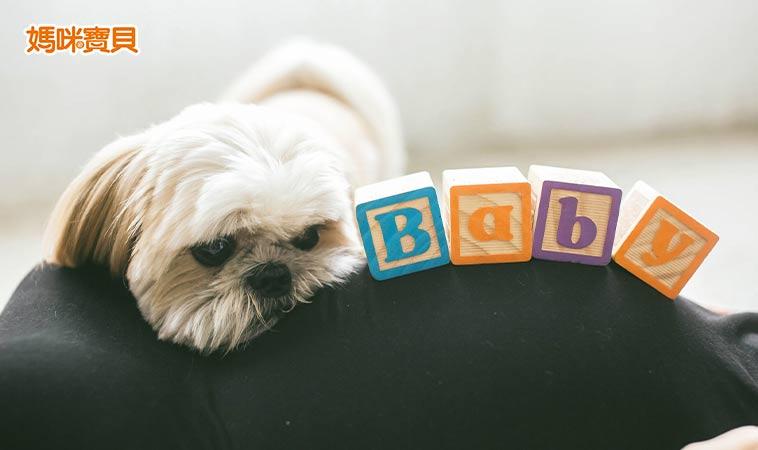 孕婦可以養寵物嗎?懷孕後與毛小孩相處要訣