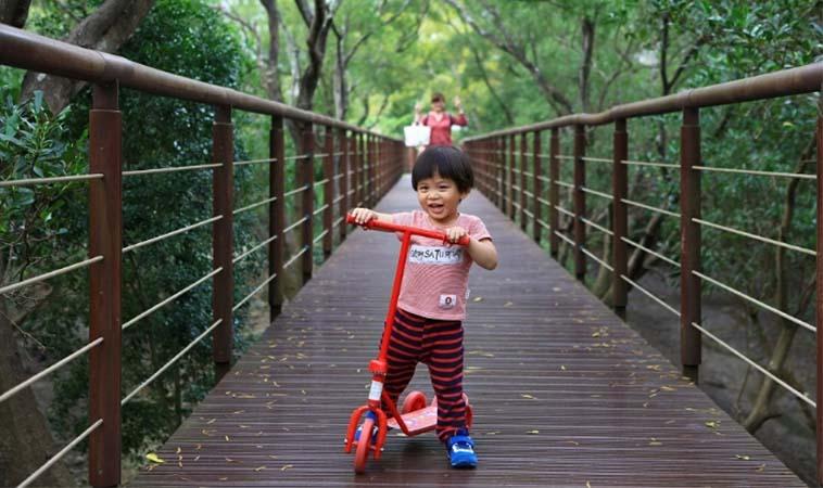 淡水紅樹林親子步道,漫遊自然生態