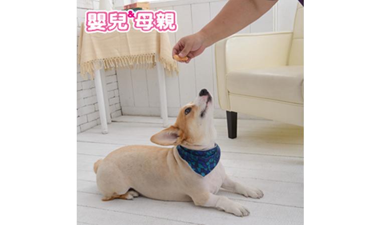 狂犬病重現台灣,全民警戒!