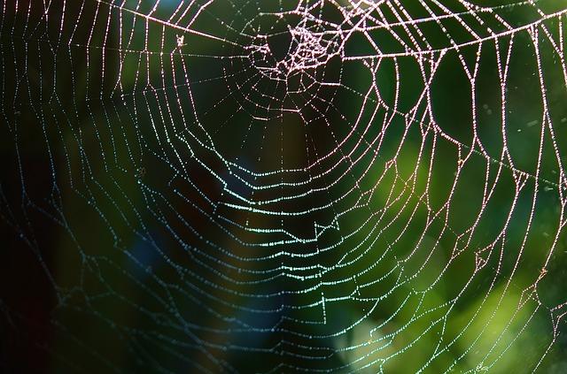 可以畫圓形的蜘蛛網嗎?別讓框架扼殺了創造力