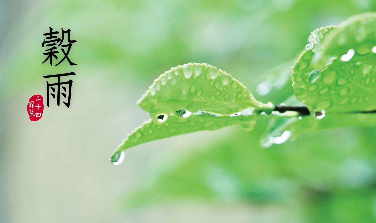 「穀雨」氣候變化大,養生首重養肝、防過敏