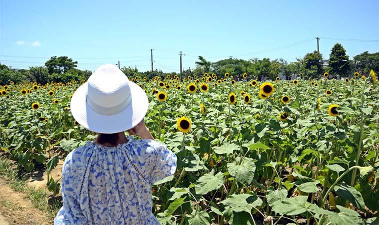 超美賞花景點,桃園免門票向陽農場