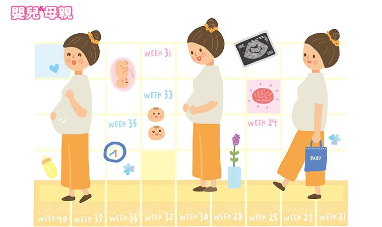 21~40週胎兒成長,肚子裡的寶寶長什麼樣了?
