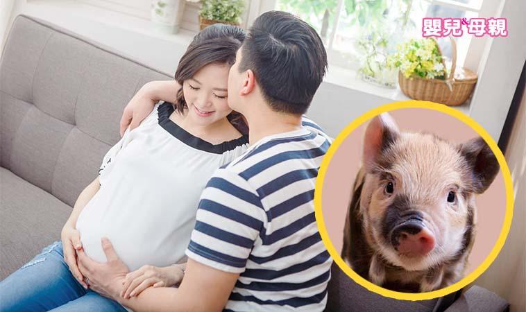 2019年想要有個豬寶寶嗎?快跟老公拼做人