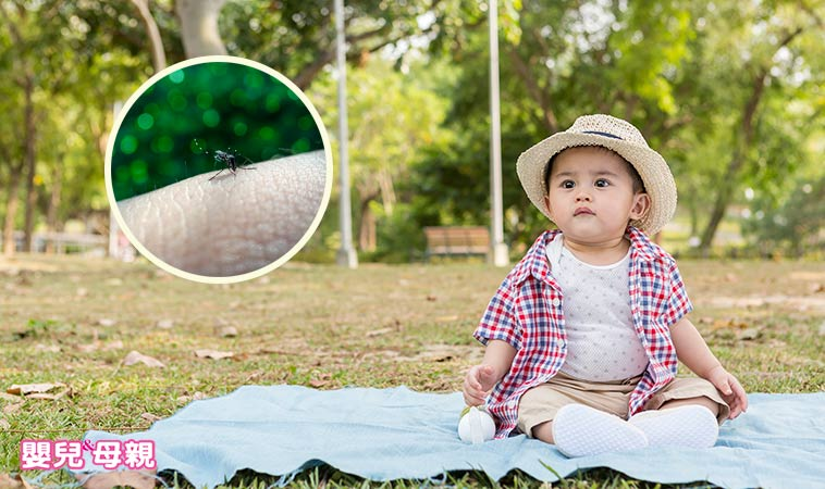 嚴防登革熱,天然防蚊包自己動手做!醫:有效驅蚊又能抗菌
