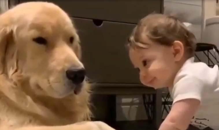 當小嬰兒遇到狗狗,那就是世界上最可愛的組合啦