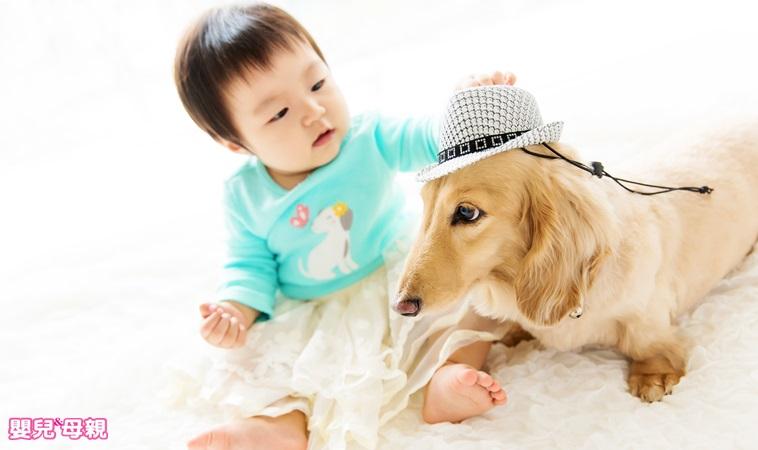 孩子吵著養寵物?飼養前須符合4條件、做好7大準備!