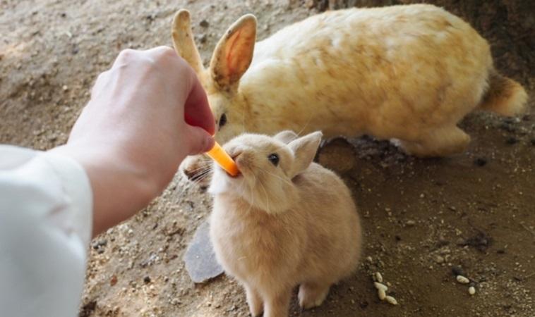 沒養兔子也中標!國內出現首例本土「兔熱病」