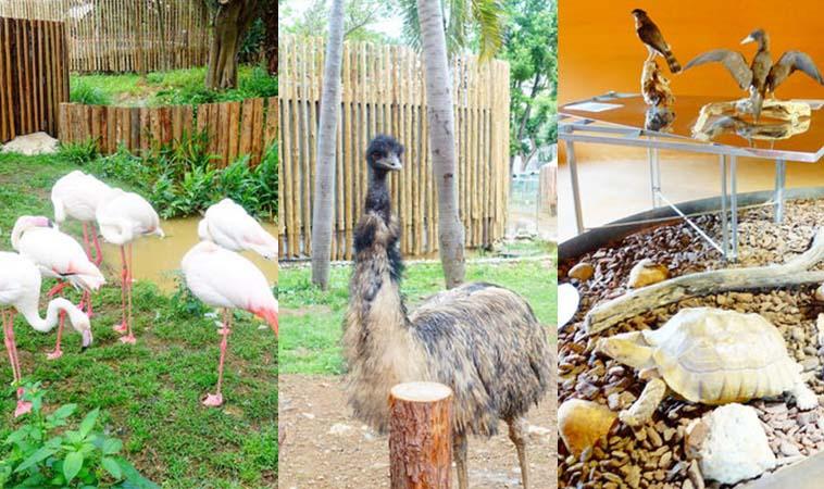 小小孩最愛的動物天地,新竹市立動物園