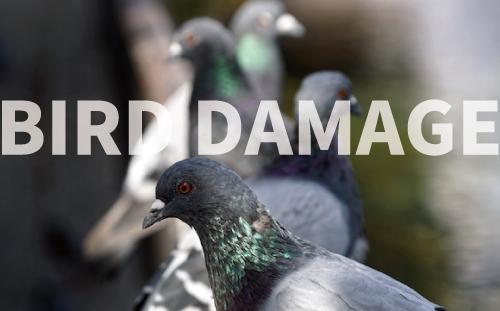 どこまでできる⁉ 自社で行なう工場の鳥害対策<br>鳩・小鳥(スズメ)の糞被害はサニプロまで!
