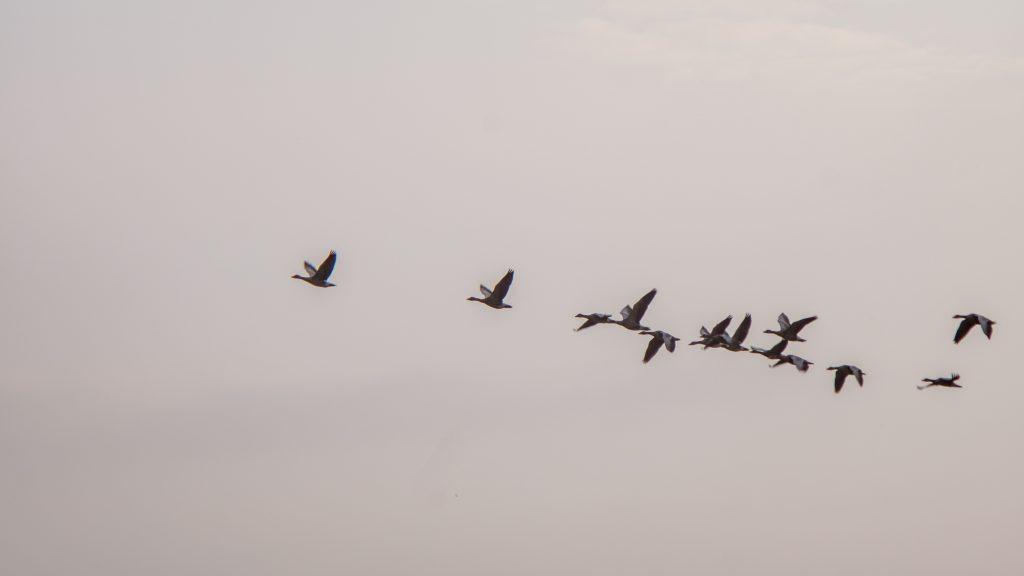 How to hack management - migrating birds image