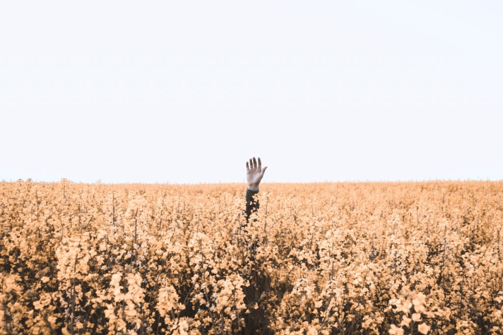 Being present in the messy middle as illustrated by a hand in a field