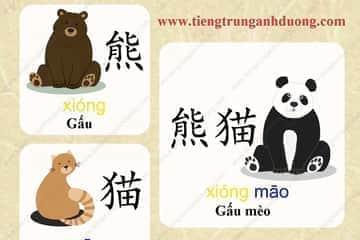 Học tiếng Hoa giá cực rẻ chỉ 99.000đ