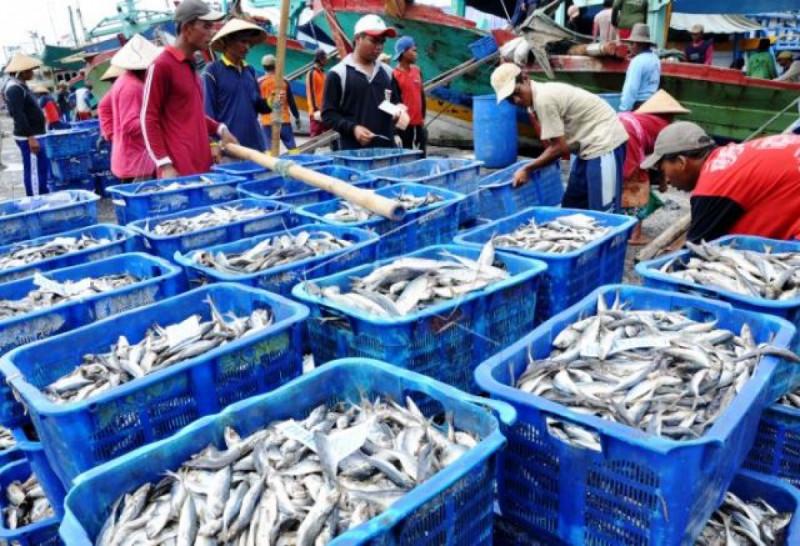 Ilustrasi Pelelangan Ikan. Foto: (doc/Antara)