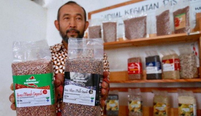 Samanhudi, Ketua P4S Sertanio Banyuwangi, yang mengekspor beras merah organik ke beberapa negara di Amerika Serikat dan Eropa. ( Foto : AntaraNEWS )