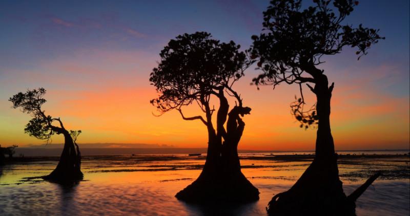 """""""The Dancing Trees"""" Pantai Walakiri, Sumba Timur, NTT. (Foto: Misbachul Munir/Pesona Travel)"""