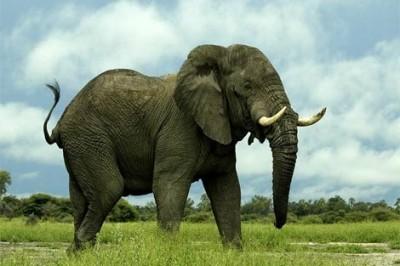 5 Binatang Dengan Suara Paling Kuat