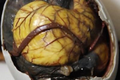 Mengenal Balut sebagai makanan paling menjijikan