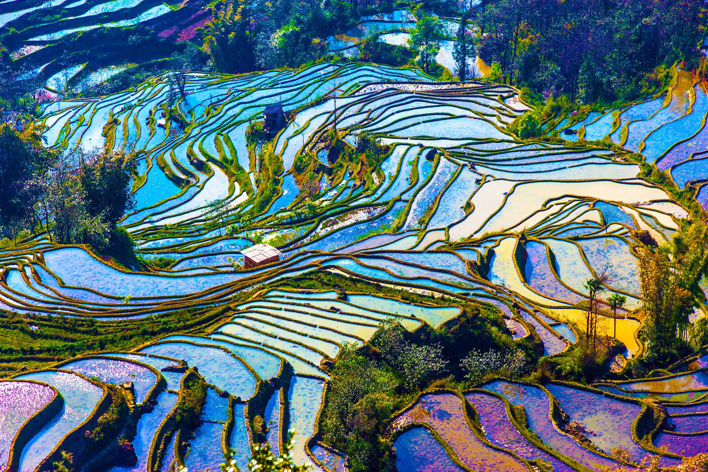 Rice-Terraces-v2.jpg