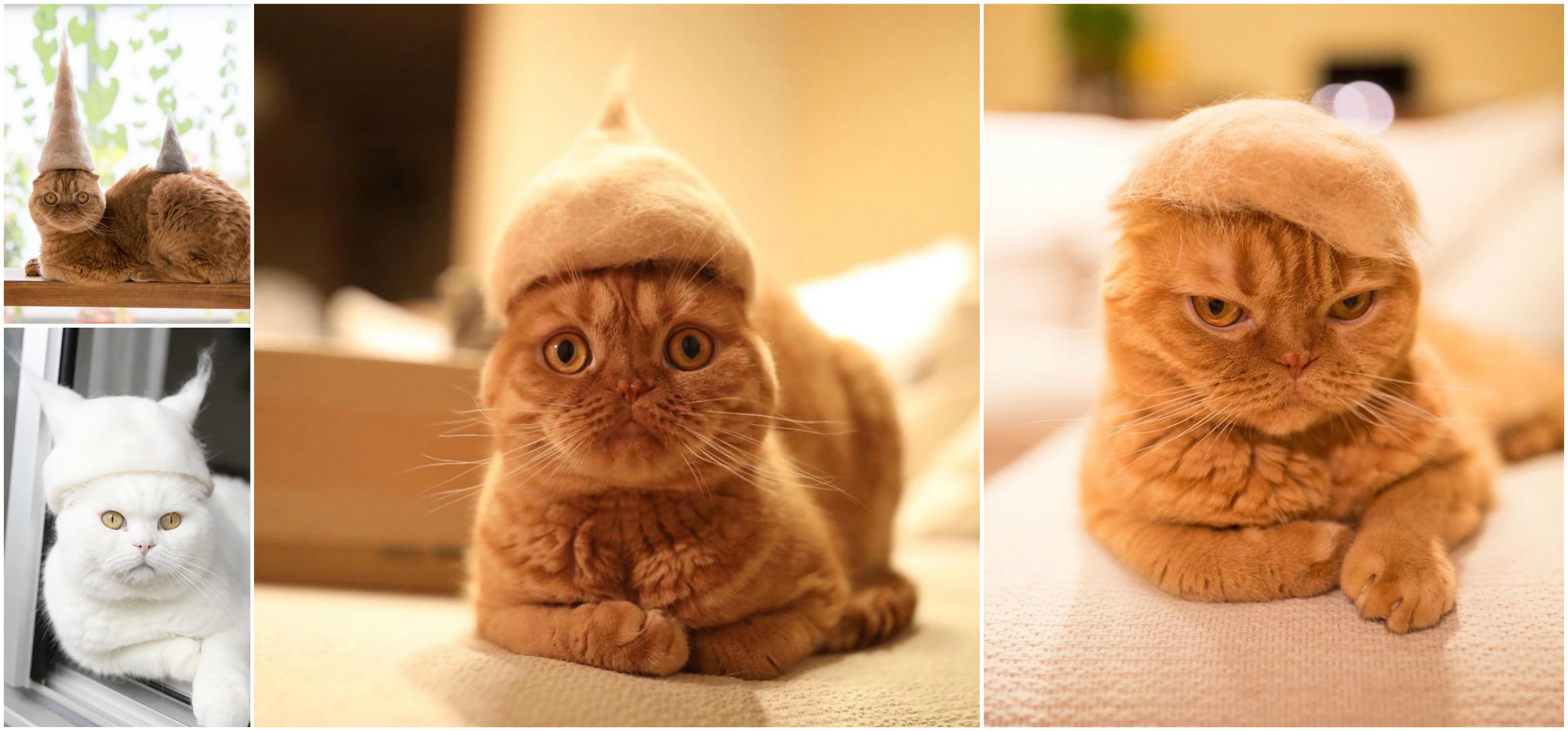 Cat-In-The-Hat-Collage.jpg