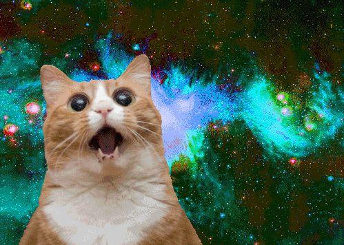 Cat-Image.jpg