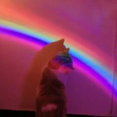 rainbow-cover