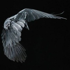 DarknessXCIII-cover