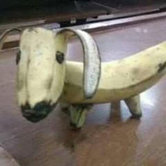 bananadog-cover