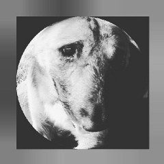 Jackerlo-cover