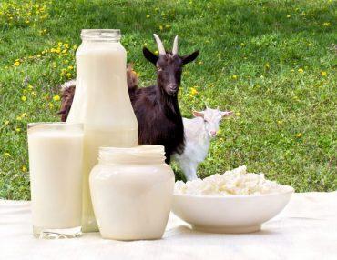 นมแพะกับเด็ก