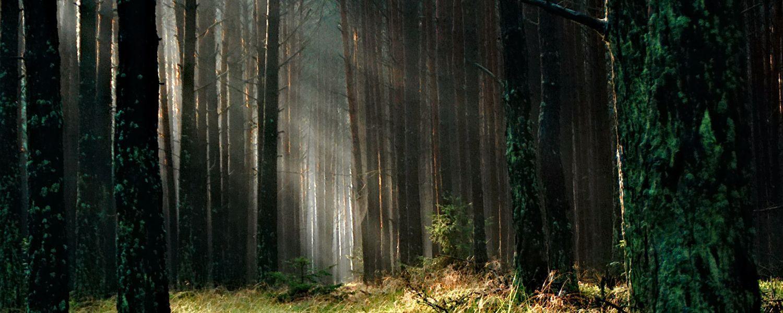ผลการค้นหารูปภาพสำหรับ ป่าใหญ่
