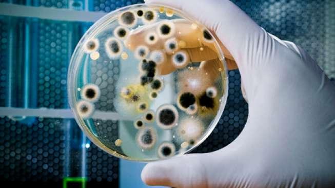 Ilustrasi bakteri. (Shutterstock)