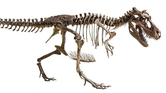 Ilustrasi fosil Tyrannosaurus Rex (T-Rex). [Shutterstock]
