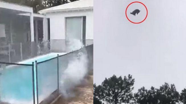 Jutawan marah kolam renangnya dijatuhi babi mati dari helikopter (YouTube)