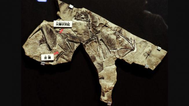 Fosil Yiqi. [Wikipedia]