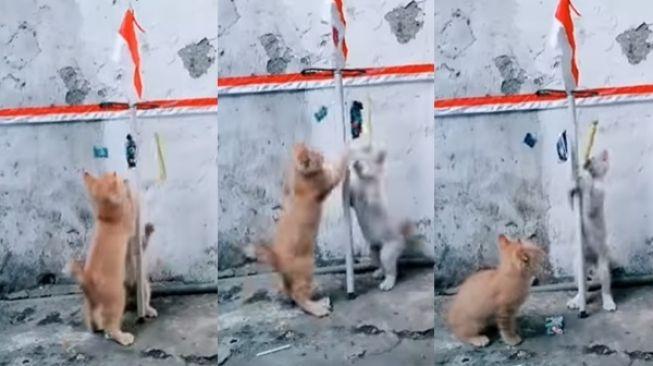 Video Anak Kucing Lomba 17 Agustus Bak Panjat Pinang. (Instagram/@undercover.id)