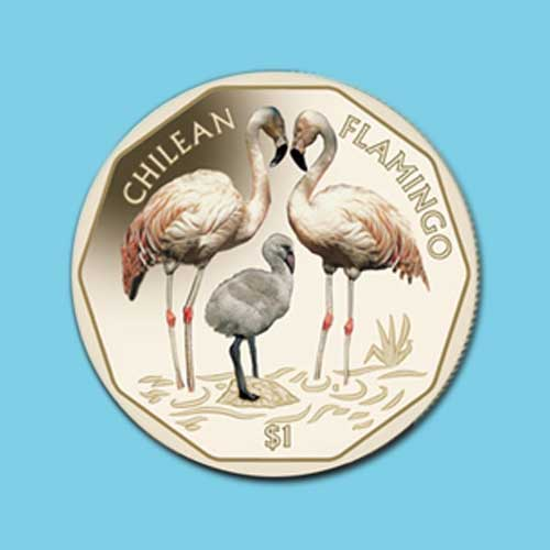 Chilean-Flamingo-on-Coins