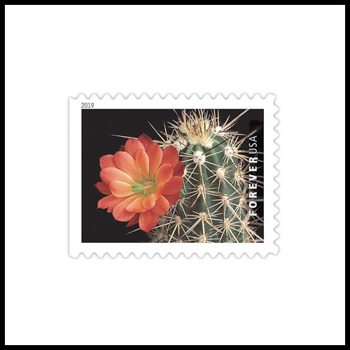 New-US-Stamps-to-Feature-Cactus-Flowers