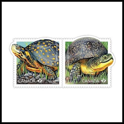 Spotted-Turtle-and-Blanding's-Turtle-on-Latest-Canadian-Stamps