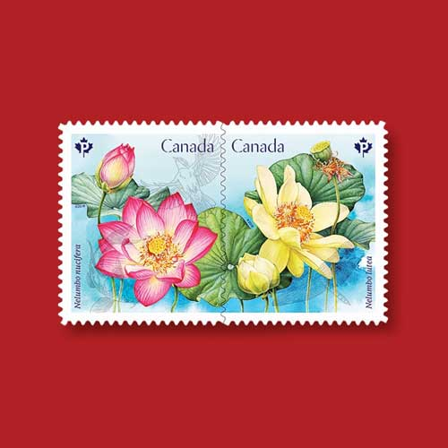 Two-Types-of-Lotuses-Featured-on-Latest-Canadian-Stamps