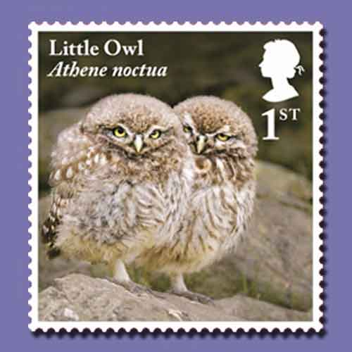 Owls-and-Owlets-on-Latest-Royal-Mail-Stamps