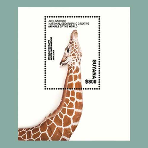Souvenir-Sheet-of-Guyana-Features-the-Long-Neck-of-a-Giraffe